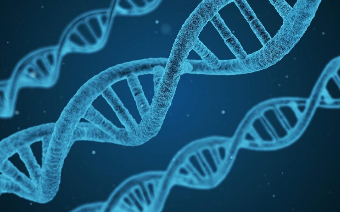 Beginners guide to DNA and genealogy